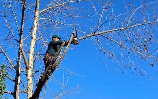 Незаконная вырубка деревьев у дома: ответственность, наказание.