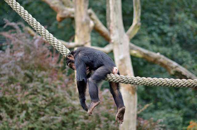 как подать на алименты, если муж не работает , обезьяна ленится