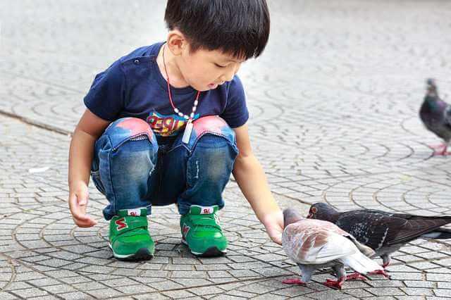 исковое заявление об уменьшении размера алиментов, ребенок кормит голубей