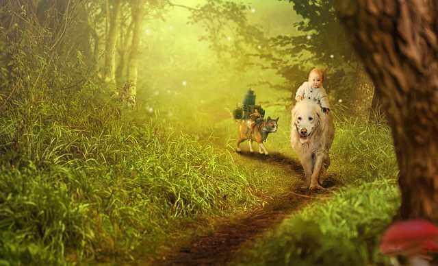 исковое заявление об увеличении размера алиментов, ребенок собака в лесу