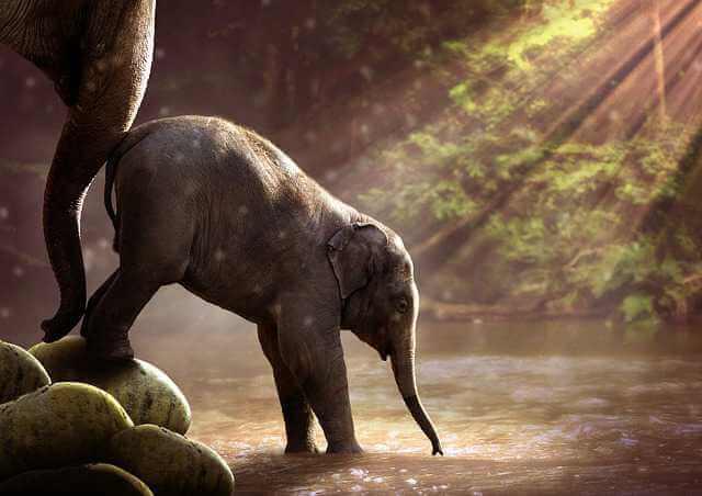 Как узнать приватизирована ли квартира, слониха подталкивает слоненка на водопой