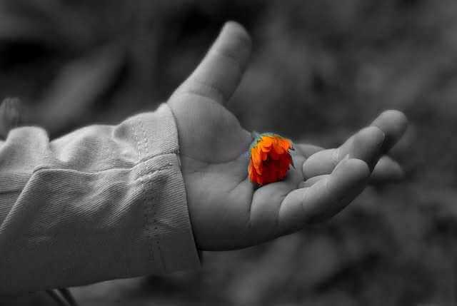 Прописка с правом собственности,цветок в ладонях ребенка
