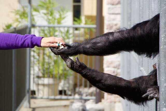ВТБ и ипотека ДОМ.РФ,человек передает попкорн обезьяне, которая тянет руки из клетки