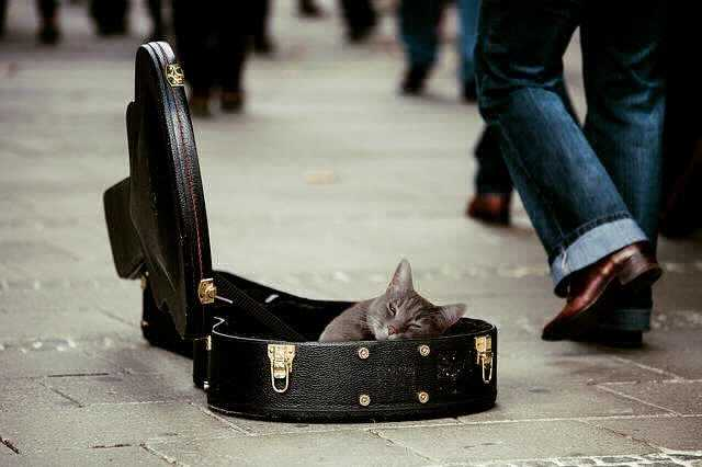 ипотека в Россельхозбанке без первоначального взноса, кошка лежит в футляре от гитары бродяги, который собирает деньги