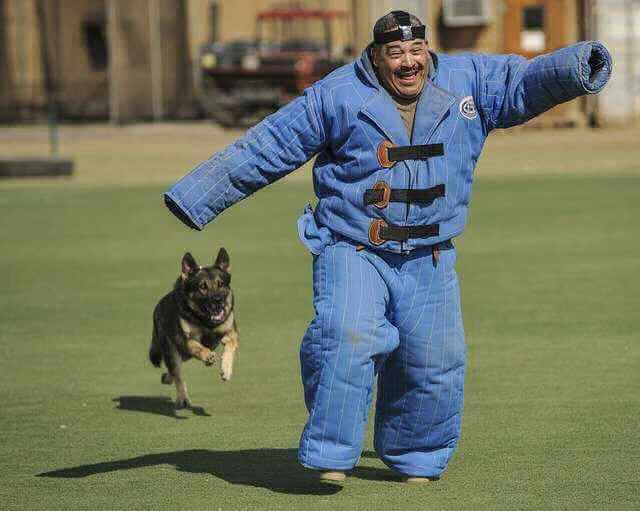 сокращение пенсионеров при сокращении штата, мужик бежит от собаки