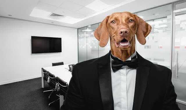 Фиктивный трудовой договор,собака в костюме