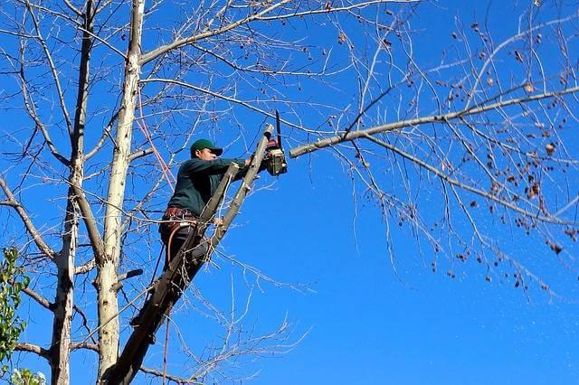 самовольная вырубка деревьев на придомовой территории, мужик спиливает дерево